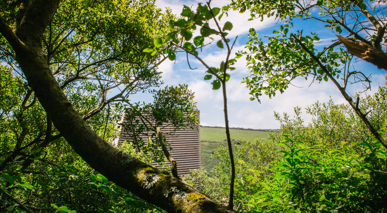 The striking architecture of a Kudhva that's in North Cornwall sits nestled in the trees
